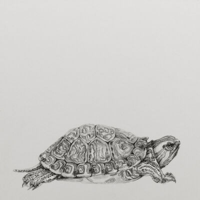 "Carlos Alarcón, '""Turtle"" from the series ""Paradoxes""', 2018"