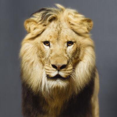 Tyler Shields, 'Lion', 2019