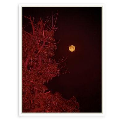 Balarama Heller, 'Desire Tree', 2019