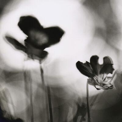David Johndrow, 'Pansies', 2004