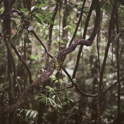 Mona Kuhn, 'Jungle Knot', 2009