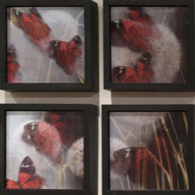 Ann Weiner, 'Transformations #1', 2006