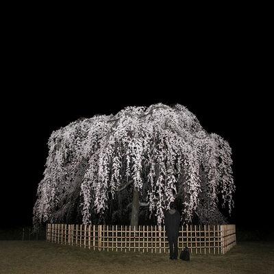 Sascha Weidner, 'Hanami: Nightcall', 2013