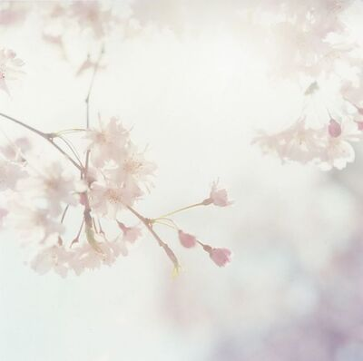 Rinko Kawauchi, 'Untitled, from the series 'Approaching Whiteness'', 2011