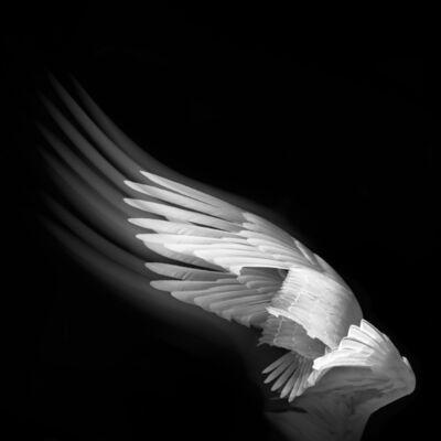 Eriko Kaniwa, 'Wings 6', 2019