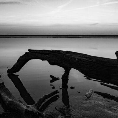 Brian Freer, 'Fallen II: York River Shore', 2021