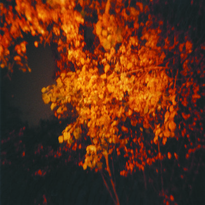Amy Blakemore, 'Glowing Tree', 1997