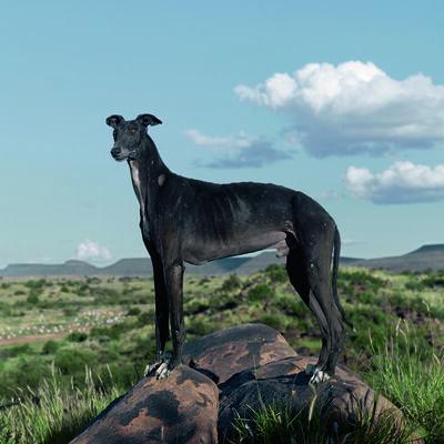 Daniel Naudé, 'Africanis #20, Petrusville, Northern Cape, from Animal Farm', 2011