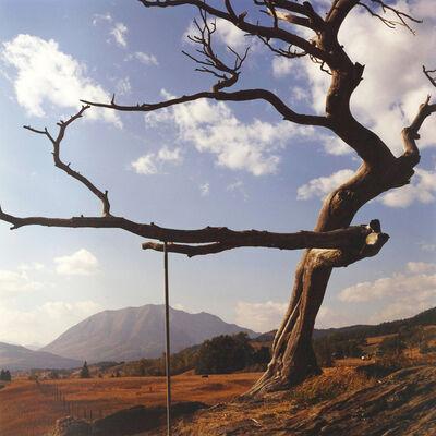 Dianne Bos, 'Burmis Tree', 2012