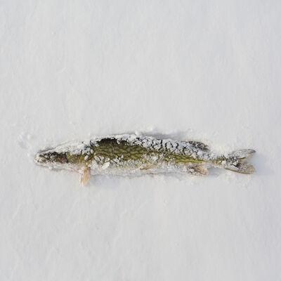 Federico Pardo, 'Ice Shanties', 2016-2017