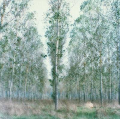 Lynn Geesaman, 'Monticiano, Italy (10-00-6c-9)', 2000
