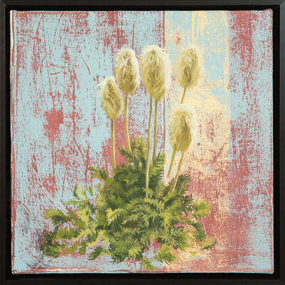 Mary Iverson, 'Western Pasqueflower Seed Head', 2018