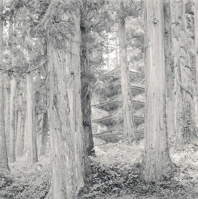 Rolfe Horn, 'Pagoda, Mount Haguro, Japan', 2008