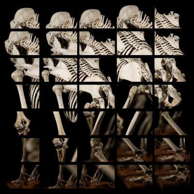 Daniel Arvizu, 'Gorilla mosaic', 2019