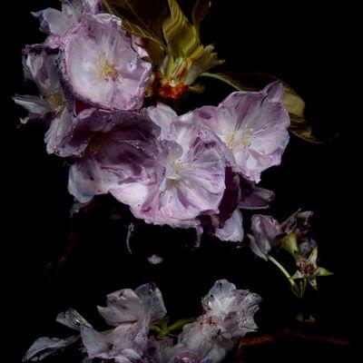 Alexander James Hamilton, 'Floral Study [0464]', 2012