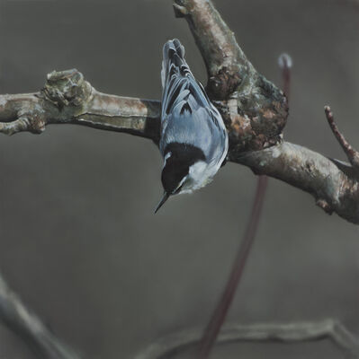 Ben Schonzeit, 'Nuthatch', 2013