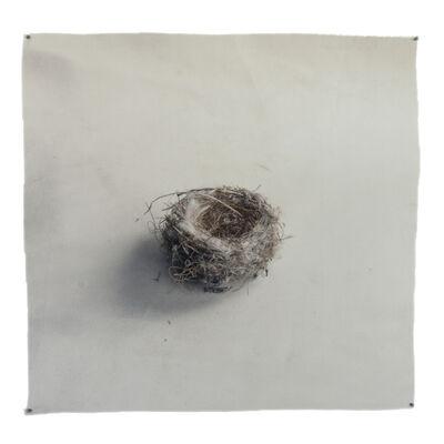 Kate Breakey, 'Nest 33', 2019