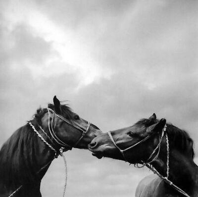 Pentti Sammallahti, 'Untitled (Horse Kiss)', 1979