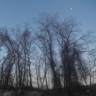 Betsy Weis, 'Trees and Moonlit Sky ', 2018