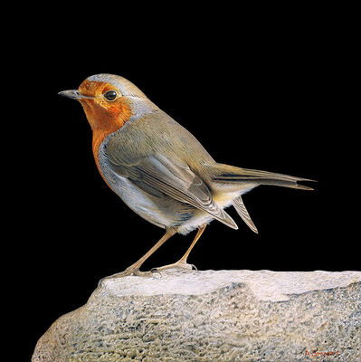 Adrian Smart, 'Robin on Rock'