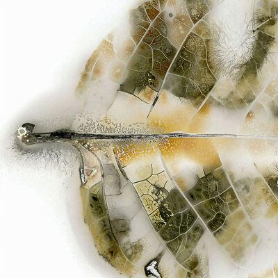 Edward Bateman, 'Leaf No. 39C2', 2017