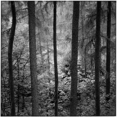Paul Hart, 'Shroud', 2004