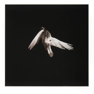 Jeremy Geddes, 'Misere/Miserere Print Set One', 2013