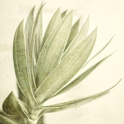 Thomas Hager, 'Tropical Botan - I, 1/10', 2017