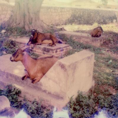 Julia Beyer, 'Graveyard Goats', 2017