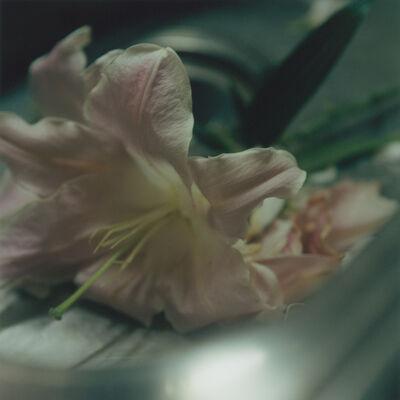 Mikiko Hara, 'Untitled', 2016