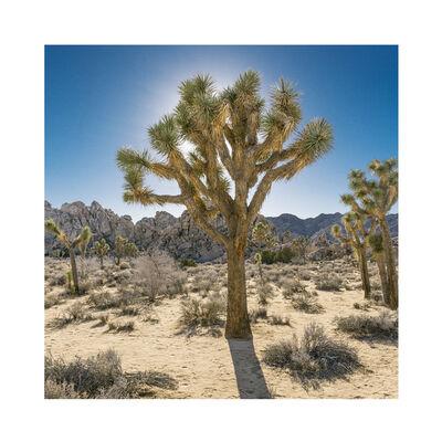 Daniel Mirer, 'Joshua Tree, Mojave Desert, California', 2017