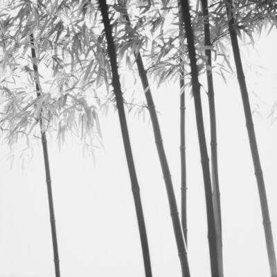 Choi Byung-Kwan, 'Bamboo series'