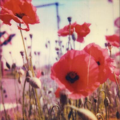 Carmen de Vos, '02 | Poppy Realm', 2018