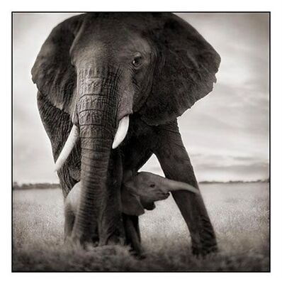 Nick Brandt, 'Elephant mother with baby holding leg, Serengeti', 2002