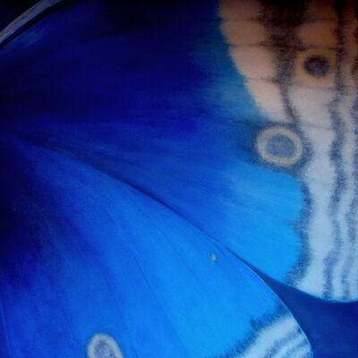 Kirstin McCoy, 'Blue Butterfly', 2016