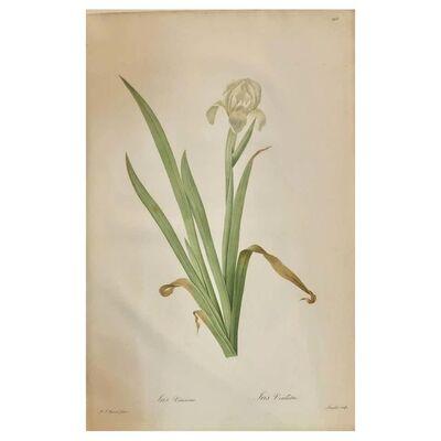 Pierre Joseph Redouté, 'Iris Virescens, Lalics Hand Colored Engraving Signed P. J. Redoute', 1800