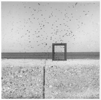 Shoji Ueda, 'A Flock of Birds', 1952-1953