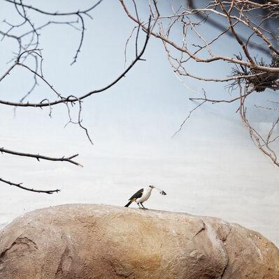 Eric Pillot, 'Bird, feather and painted sky'