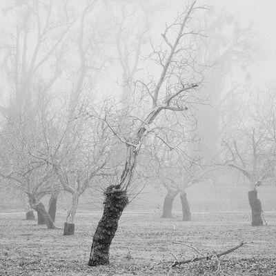David Paul Bayles, 'Orchard for Arlo 60', 2019
