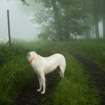 Cig Harvey, 'The Wolfhound, Hope, Maine', 2011