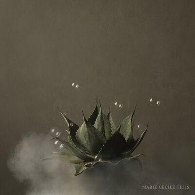 Marie Cecile Thijs, 'Cactus', 2019
