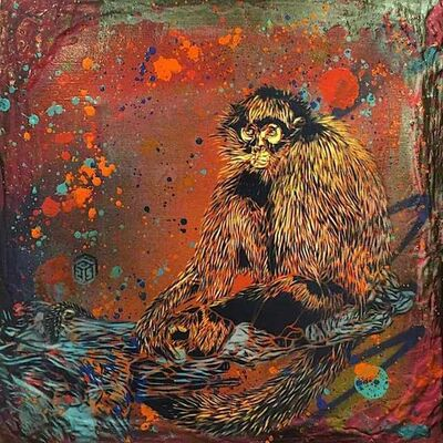 C215, 'Monkey ', 2017