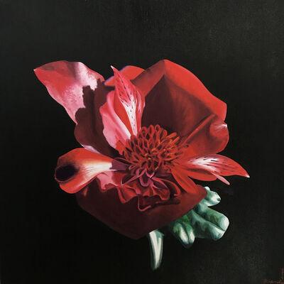 Brandy Kraft, 'Rosmeria Atrosanguineus', 2019