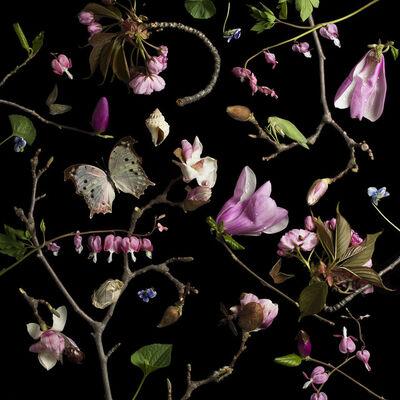 Paulette Tavormina, 'Botanical III, Bleeding Hearts and Magnolias', 2013