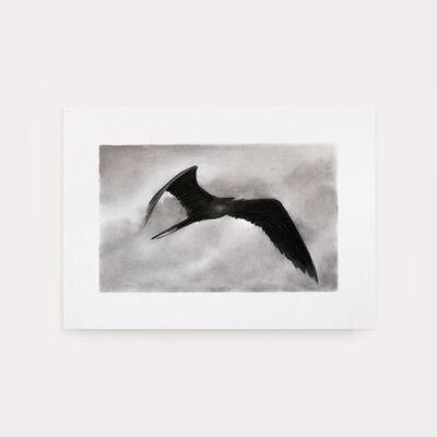 Sax Impey, 'Frigate Bird Study', 2019