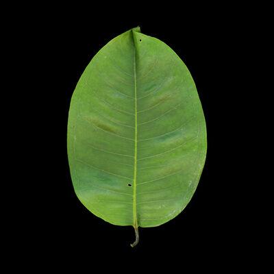 Meridel Rubenstein, 'Angsana Leaf Green', 2010-2011