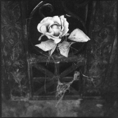 Denise Oehl, 'Philmont Flower', 2018