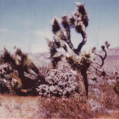 Kirsten Thys van den Audenaerde, 'Yucca', 2019