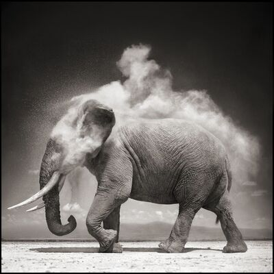 Nick Brandt, 'Elephant with Exploding Dust, Amboseli 2004', 2004