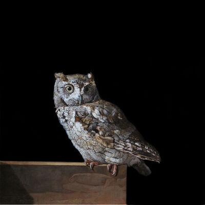 Patricia Traub, 'Female Eastern Screech Owl', 2019
